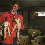 In de schapenstal